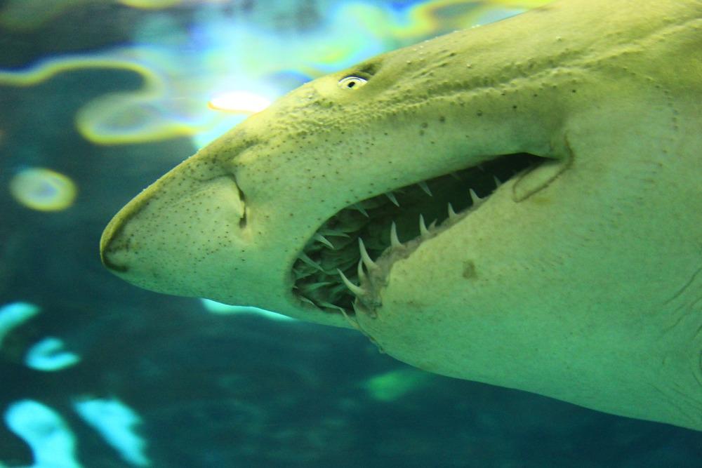 に われる 夢 襲 サメ 【夢占い】鳥の夢の意味と心理63選!襲われる・つがい・たくさん・大きい