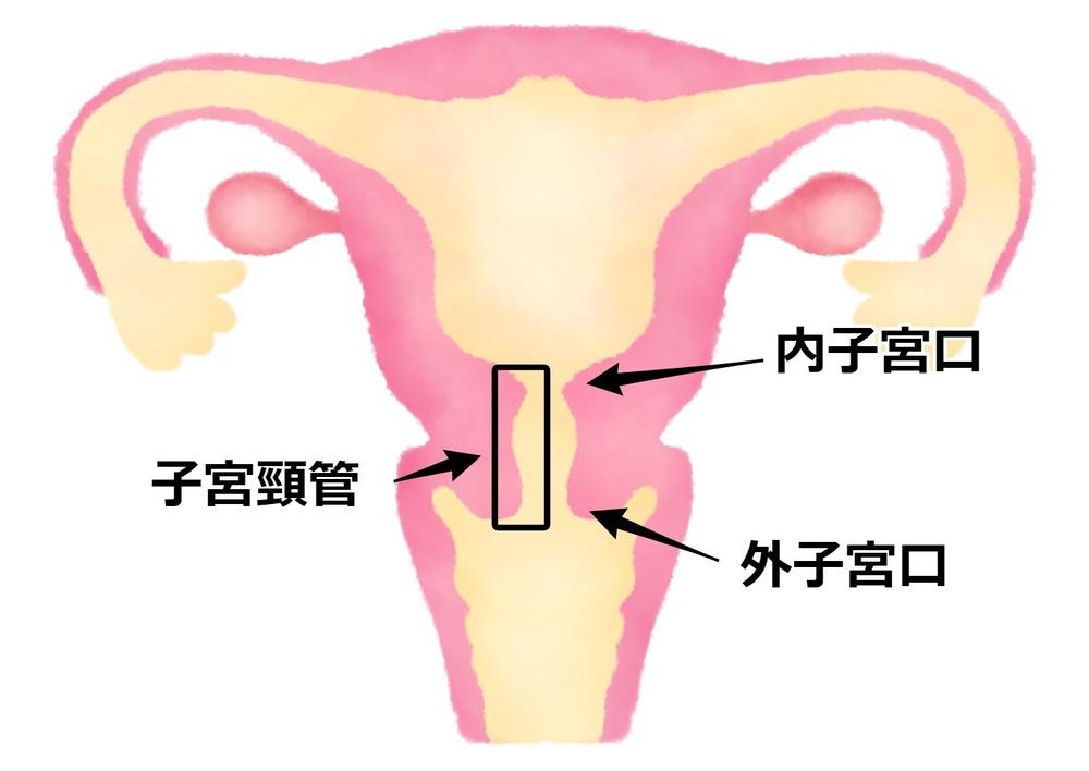 口 何 子宮 センチ 出産
